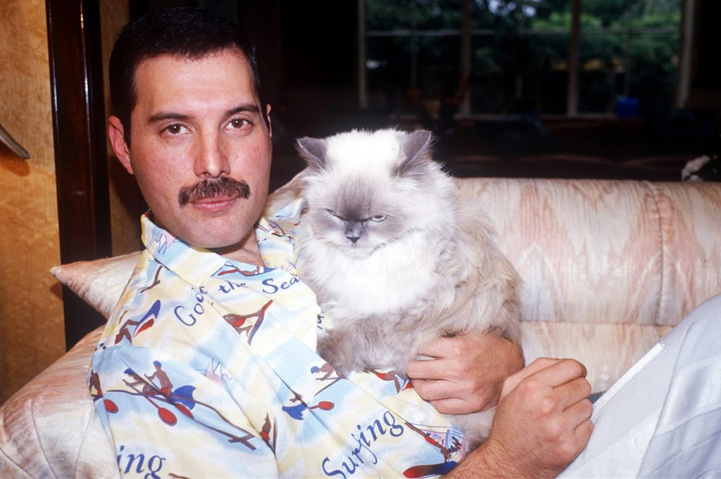 Freddie Mercury gatos